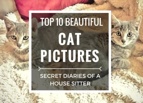 My top ten most beautiful cat pictures from house sitting and pet sitting in Australia.