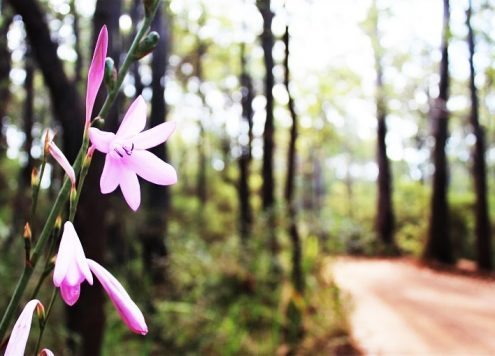 Looking for an eco-friendly Margaret River camping spot? Wharncliffe Mill Bush Retreat is located in Bramley National Park, just a 15-minute walk from Margaret River Western Australia, and offers a range of accommodation, as well as beautiful bush trails and cycle tracks right on its doorstep.