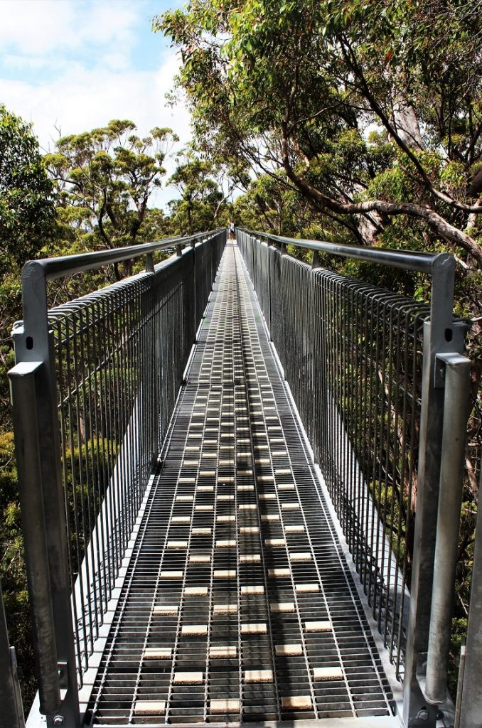 Visit the famous Valley of the Giants Australia, a 40 metre-high tree top walk in Walpole WA that lets you admire the vast height of the ancient red tingle trees, some over 400 years old, that are found nowhere else in the world apart from the Walpole Wilderness region of Western Australia.