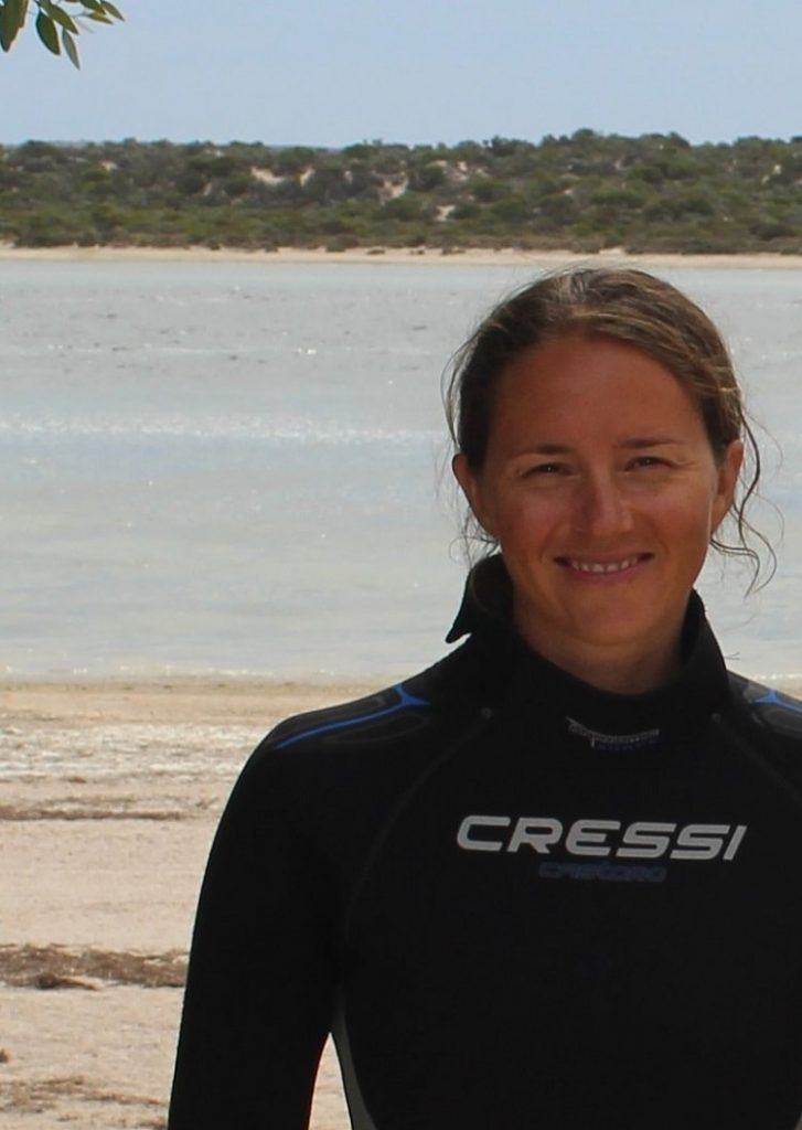 Amazing Baird Bay Sea Lion & Dolphin Swim in South Australia
