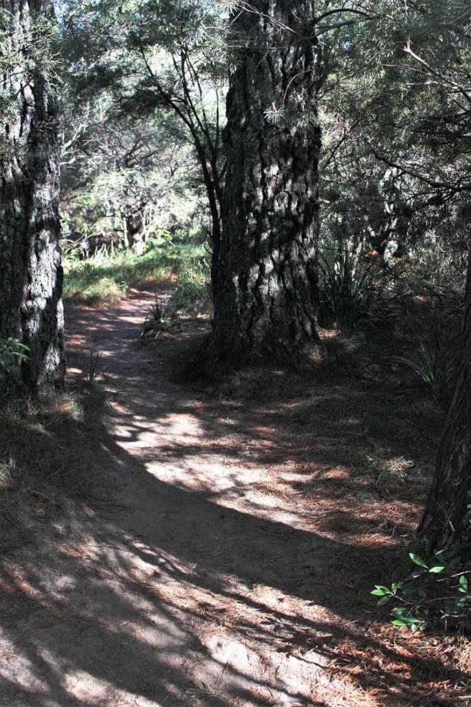 Charles Darwin walk Wentworth Falls.