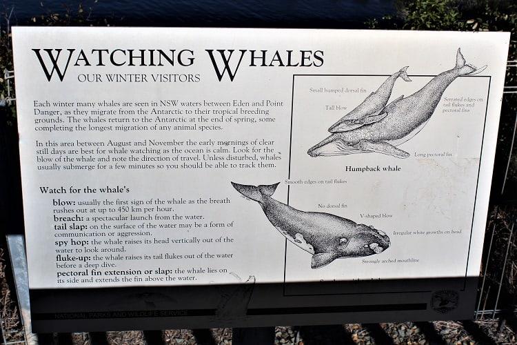 Whale watching information, Eden NSW Australia.