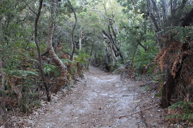 Walking track to Mungo Beach Australia.