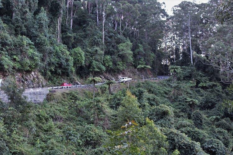 Driving through Dorrigo rainforest.