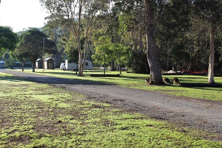 Big4 Sunshine camping: kangaroos grazing on the grass.