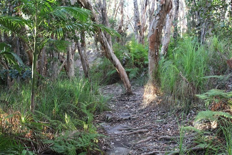 Monument Hill walking track through beautiful forest in Trial Bay.