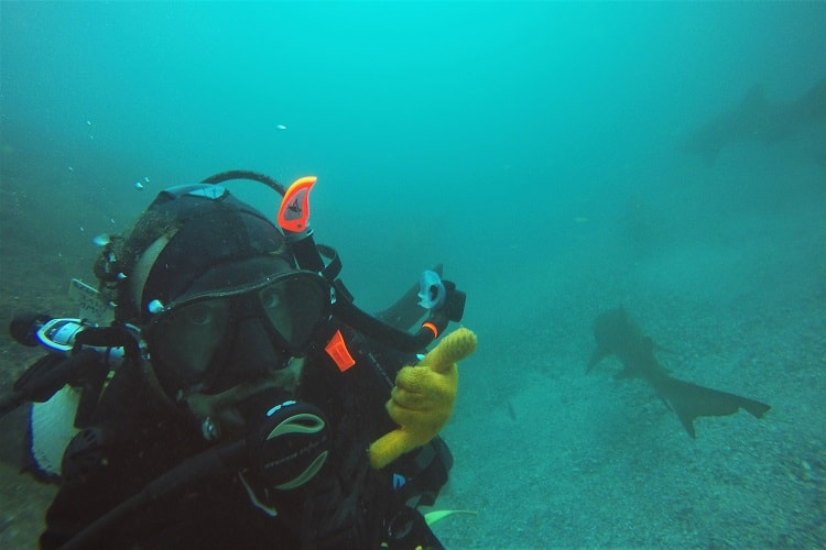 Diving Fish Rock Cave: one of many things to do in South West Rocks.