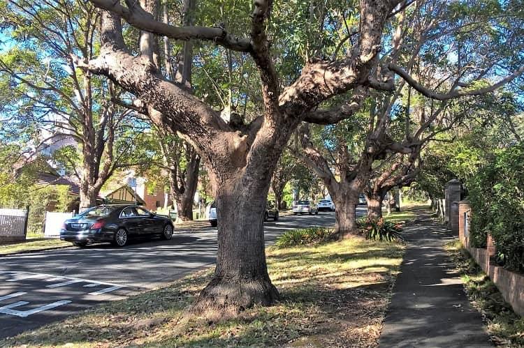 A leafy street in Gordon, one of Sydney's northern suburbs.