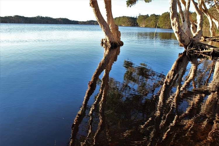 Beautiful reflections at Lake Ainsworth, Lennox Head, NSW Australia.