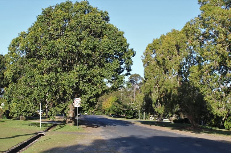 The easy, tree-lined walk into Byron Bay from the Arts Factory Lodge.