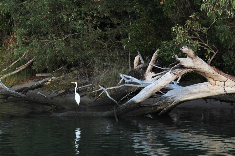 Up close to the waterbirds along Noosa River on a cruise.