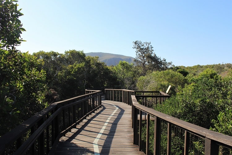 Mount Coolum viewed from the boardwalk to the beach at the Sunshiine Coast.